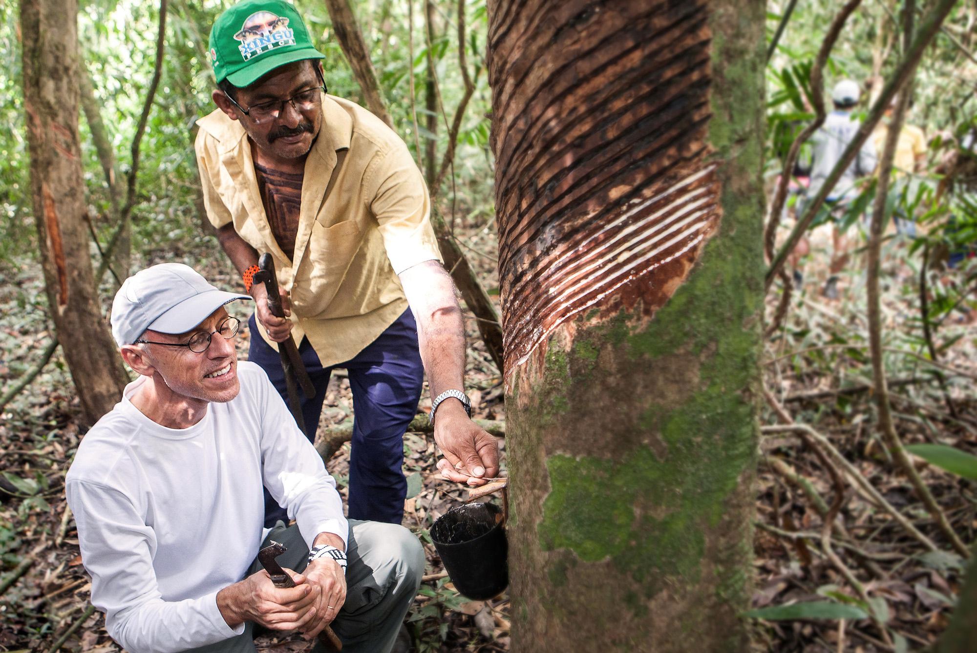 Fortalecimento da cadeia de produção de borracha natural ajuda a manter a floresta em pé